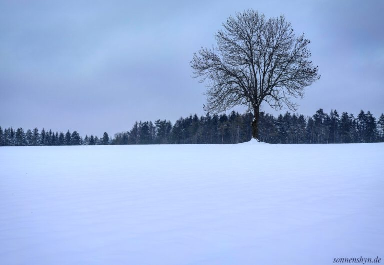 Eine weite Schneelandschaft mit einem größeren Baum im Vordergrund und einer Baumreihe im Hintergrund.