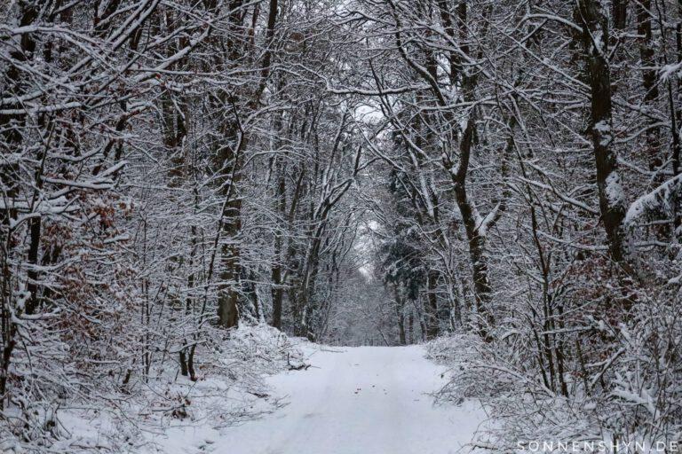 Eine Allee die in schneeweiß gehüllt ist.