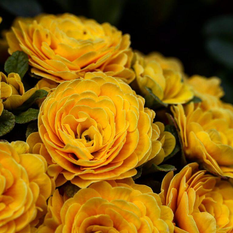 Ein Strauß voller gelber Blumen.