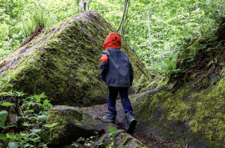 Ein Kind wandert durch einen Wald.