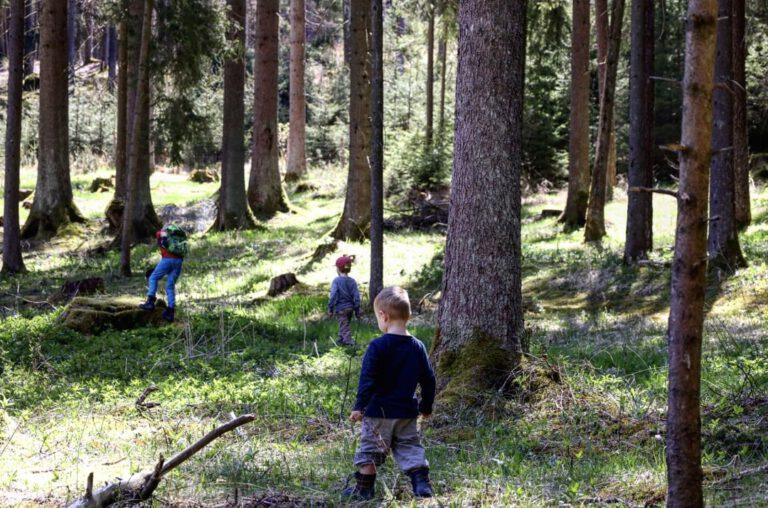 3 Kinder die im Wald spielen.