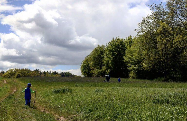 4 Personen die über eine Wiese wandern.