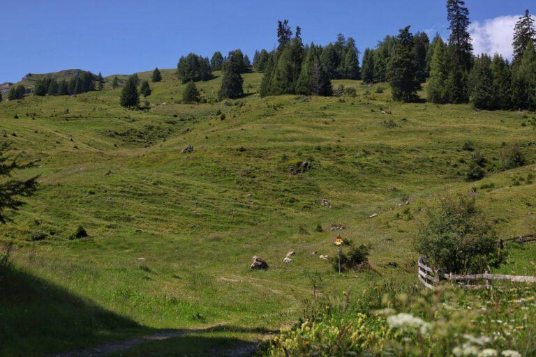 Grüne hügelige Landschaft mit Nadelbäumen