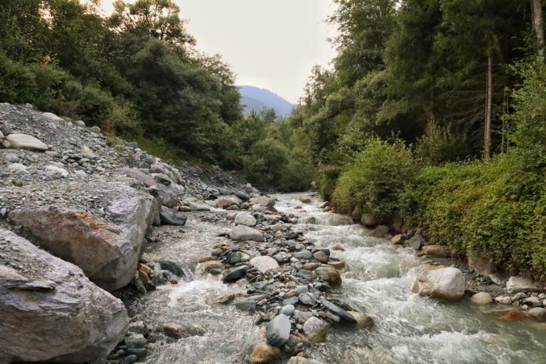 Steine und ein kleiner Bach umgeben von Wald