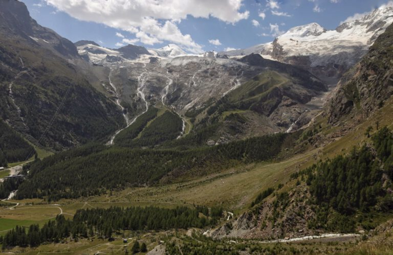 Aussicht auf einen Gletscher mit Nadelbäumen davor und schneebedeckten Gipfeln