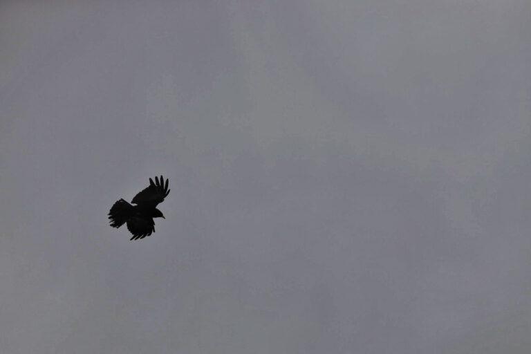 Ein schwarzer Rabe in Wolken