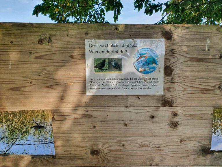 Ein Holzbrett mit Gucklöchern durch die man Vögel im Schilf beobachten kann.
